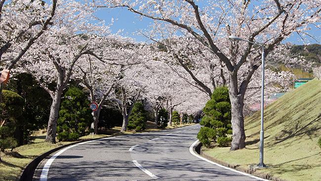 Sakura at Boso Country Club Entrance # 01