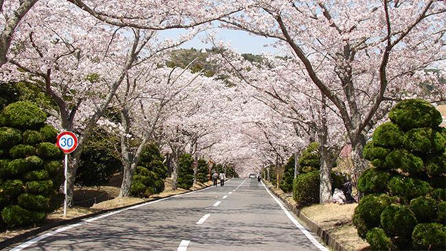 Sakura at Boso Country Club Entrance # 02