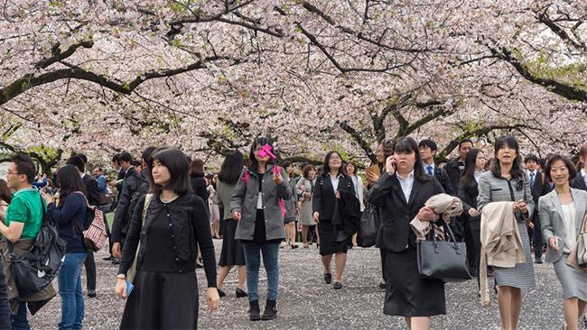 Sakura at Chidorigafuchi Park # 02