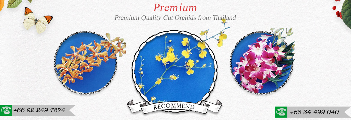 Orchid Exporter Thailand