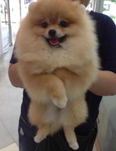 บริการรับเลี้ยงสุนัข สุขุมวิท