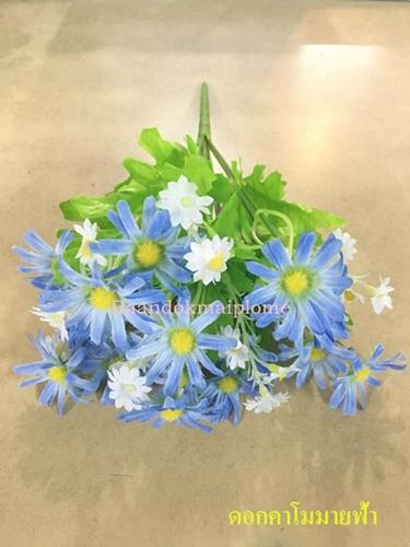 ดอกคาโมมายล์ สีฟ้า