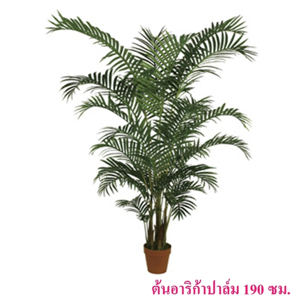 ต้นอาริก้าปาล์ม 190 ซม.