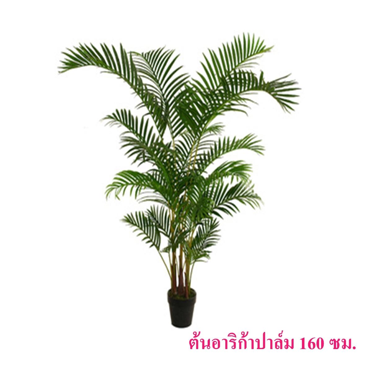 ต้นอาริก้าปาล์ม 160 ซม.