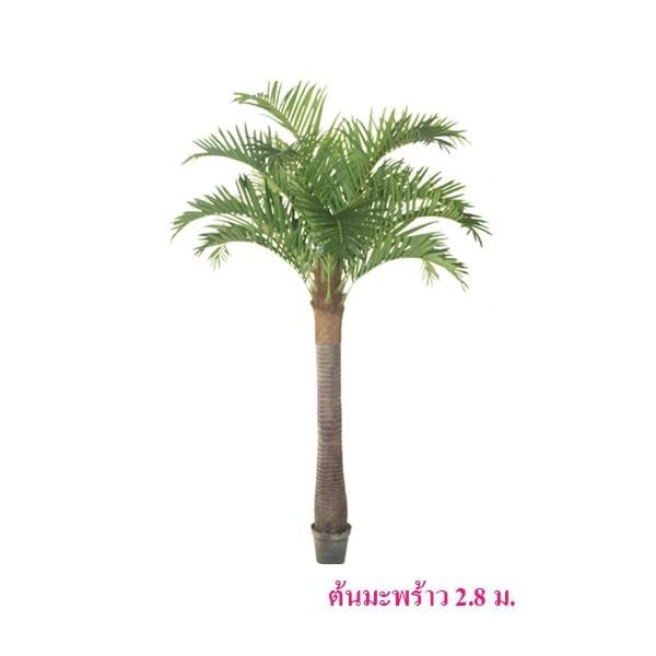 ต้นมะพร้าว สูง 2.8 ม.