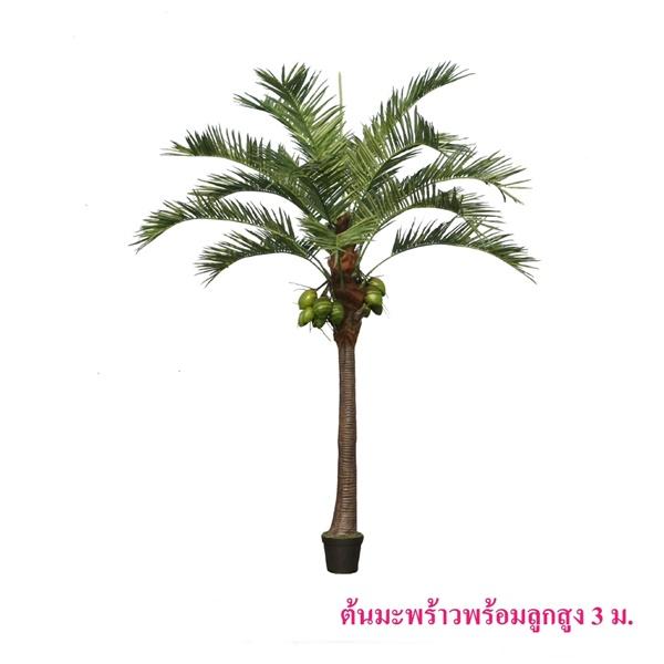 ต้นมะพร้าวพร้อมลูกสูง 3 เมตร