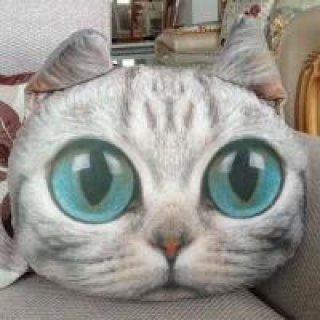 หมอนแมว