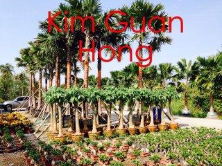 ต้นศุภโชค(ฟะฉายชู้)