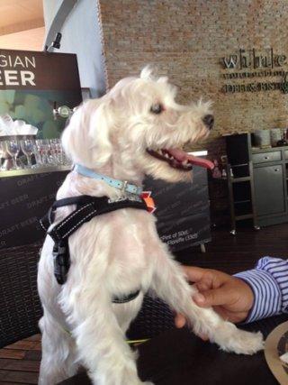 รับฝากสุนัข สุขุมวิท