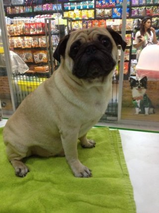 Bangkok pet grooming