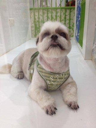 Bangkok dog hotel