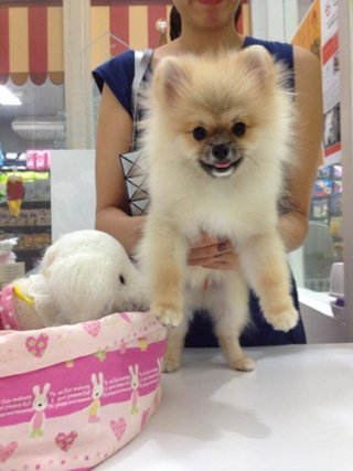 Bangkok pet accessories
