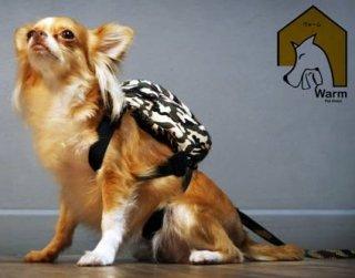 Bangkok dog backpack