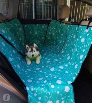 Bangkok dog car seat
