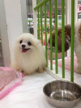 Dog daycare Bangkok