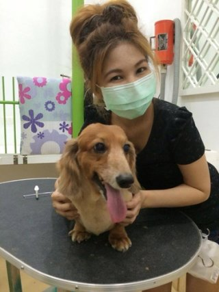 Dog daycare Sukhumvit