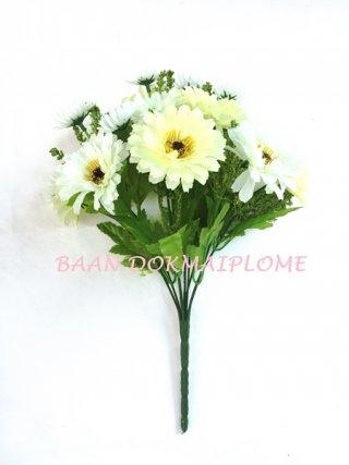 ดอกมัมขาว