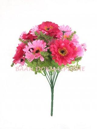 ดอกมัมบานเย็น