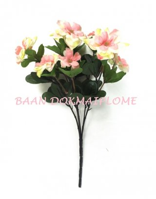 ดอกอาซาเลีย สีโอรส