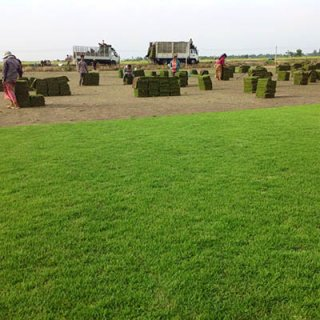 รับปลูกหญ้าจัดสวน