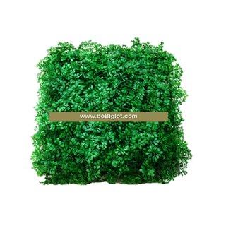 หญ้าผักชีใบกลม 25*25 cm.