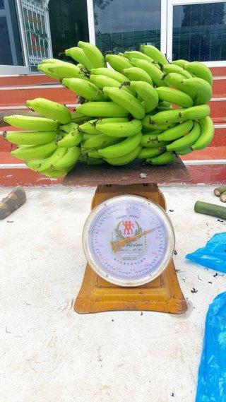 ราคากล้วยหอมทอง