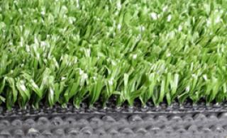 หญ้าสีเขียวขนสั้น