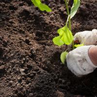 รับจ้างปลูกต้นไม้ ในเขตจังหวัดชลบุรี