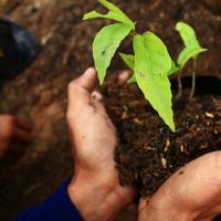 รับจ้างปลูกต้นไม้ ในเขตจังหวัดสมุทรสงคราม