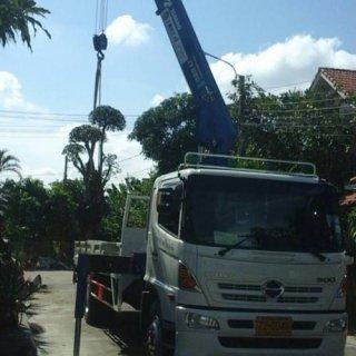 บริการรถกระเช้า งานตัดแต่งต้นไม้ตามถนน