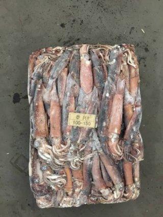 ปลาหมึกอาเจนแช่แข็ง ไซส์ 100-150