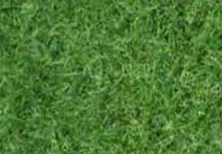 จำหน่ายหญ้าญี่ปุ่น