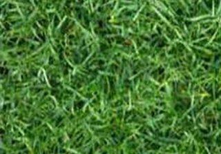 จำหน่ายหญ้าพาสพาลั่ม