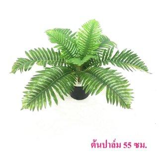 ต้นปาล์ม 55 ซม.