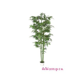 ต้นไผ่ สูง 2 ม. (133)