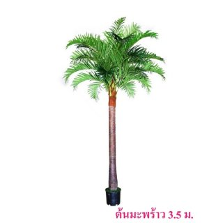 ต้นมะพร้าว สูง 3.5 ม.