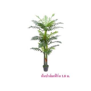 ต้นปาล์มเฟิร์น สูง 1.8 ม.