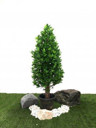 ต้นไทรเกาหลี 1.5 เมตร