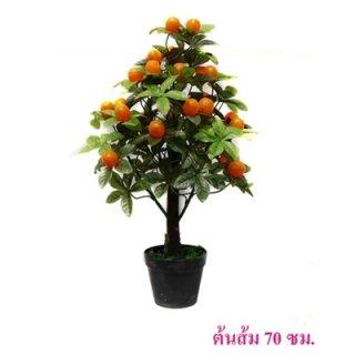 ต้นส้ม 70 ซม.