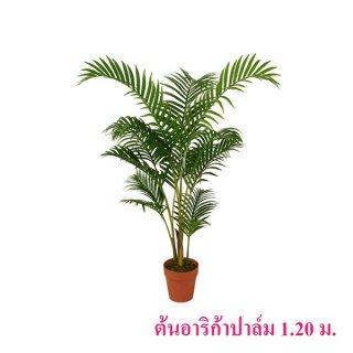 ต้นอาริก้าปาล์ม 1.2 เมตร