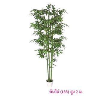 ต้นไผ่ (133) สูง 2 เมตร