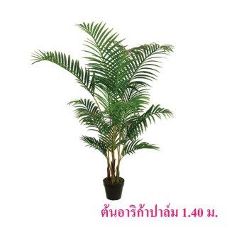 ต้นอาริก้าปาล์ม 1.4 เมตร