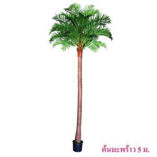 ต้นมะพร้าว 5 เมตร