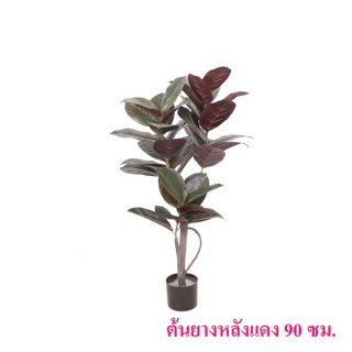 ต้นยางหลังแดง 90 ซม.