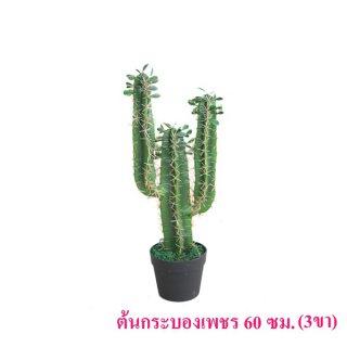 ต้นกระบองเพชร 60 ซม. (3 ขา)