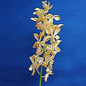 Best Price Orchids Ror Sale