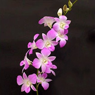 Produce Thai Orchids
