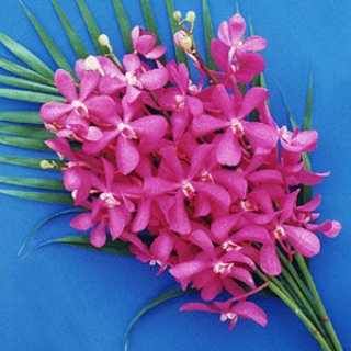 Orchid For Restaurant