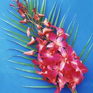 Orchid Bouquet Thailand